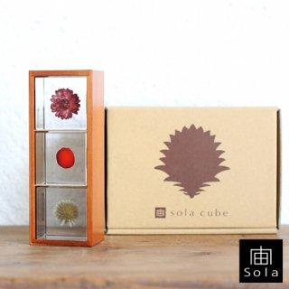 宙-sola- ソラ sola cube 3個セット(木箱付き) Bセット (カイガラソウ・ワイルーロ・ルリタマアザミ) 【送料無料】
