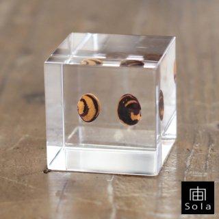 宙-sola- Sola cube カイマメ