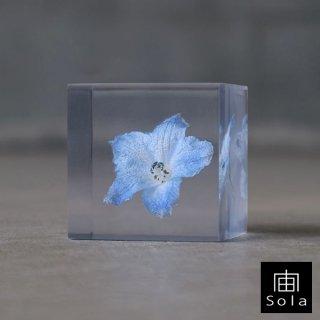 宙-sola- Sola cube デルフィニウム