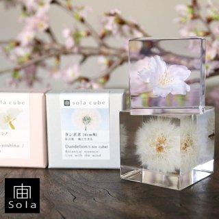 宙-sola- Sola cube サクラギフトセット (ソメイヨシノ・タンポポ 4cm)