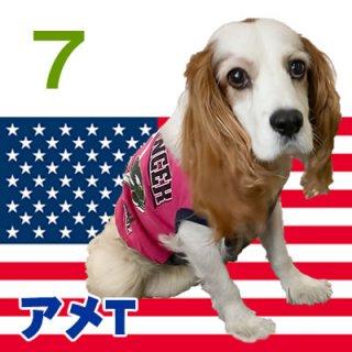 アメリカンシャツ7号