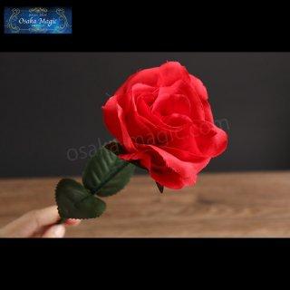 カラーチェンジングローズ〜Color Changing Rose〜バラの色が白から赤に!可憐な変化!