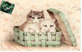 フランスアンティーク ポストカード  籠に入った二匹の猫ちゃん【普通郵便送料無料】
