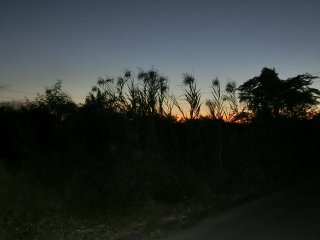 秋の夜の草むら10月下旬