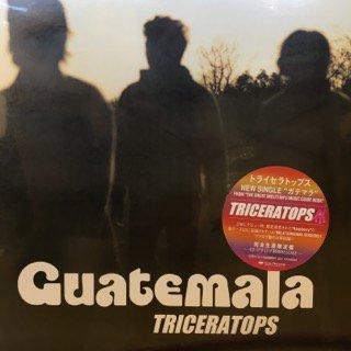 トライセラトップス/ガテマラ