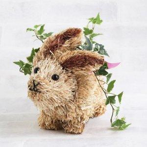 【観葉植物】アニマルポタジェ - ウサギ(アイビー)