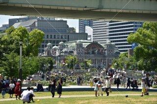 中之島公園 ばら園 大阪市中央公会堂