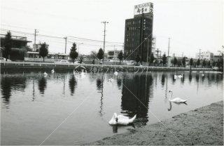 白鳥とバス 松山 昭和54 1979