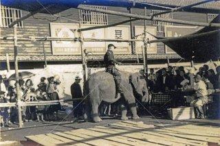 福岡 移動動物園
