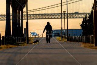 子犬の散歩 明石海峡大橋