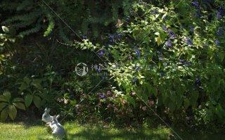 メルヘンの庭 ウサギ アゲハ蝶 舞多聞