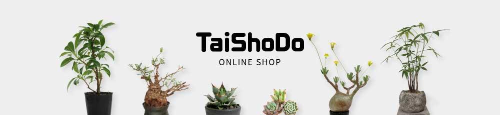TaiShoDo ONLINE SHOP 塊根植物 多肉植物通販 栃木県那須塩原市