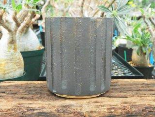 かみ山陶器 雅-ブラックゴールド 縦縞