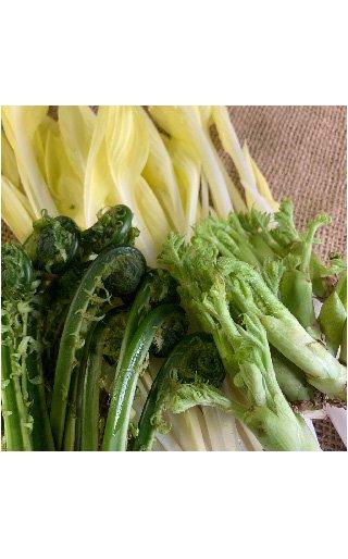 山菜セット(こごみ、タラの芽、うるい)