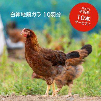 秋田白神地鶏ガラ 10羽分【地鶏手羽先10本サービス中!】