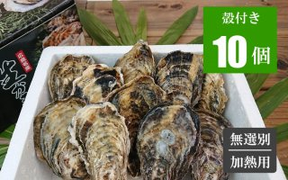広島牡蠣 殻付き10個