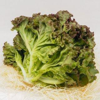 サニーレタス(九州産)農薬・化学肥料・除草剤不使用