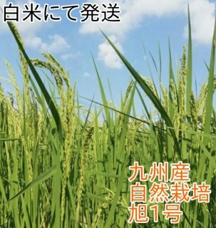 旭(あさひ)1号  白米 1kg(九州産) 自然栽培