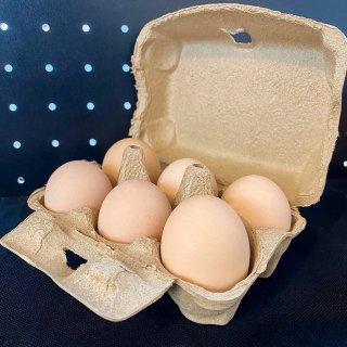 熊本県産 平飼い名古屋コーチン(日本の原種鶏100%の血統卵) 6個