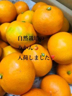 九州産 減農薬無化学肥料栽培『みかん』 3キロ