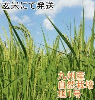 旭(あさひ)1号 玄米 1kg(九州産) 自然栽培