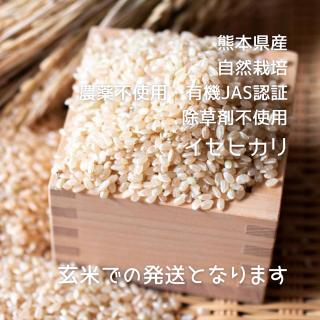 イセヒカリ 玄米 1kg