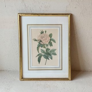 Vintage lithographe rose.a<img class='new_mark_img2' src='https://img.shop-pro.jp/img/new/icons47.gif' style='border:none;display:inline;margin:0px;padding:0px;width:auto;' />