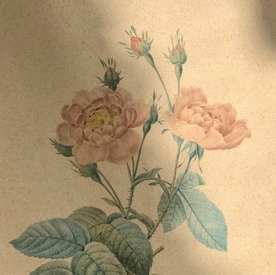 Vintage lithographe rose.b<img class='new_mark_img2' src='https://img.shop-pro.jp/img/new/icons47.gif' style='border:none;display:inline;margin:0px;padding:0px;width:auto;' />