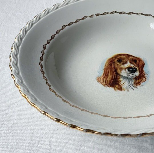 Vintage plate.Cocker Spaniel