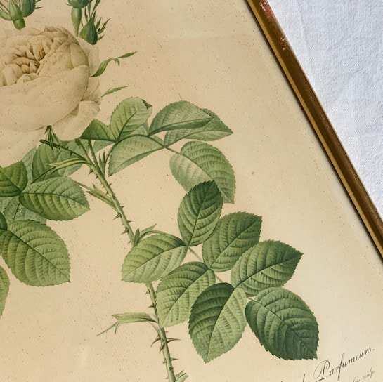 Antique lithographe rose.a<img class='new_mark_img2' src='https://img.shop-pro.jp/img/new/icons47.gif' style='border:none;display:inline;margin:0px;padding:0px;width:auto;' />