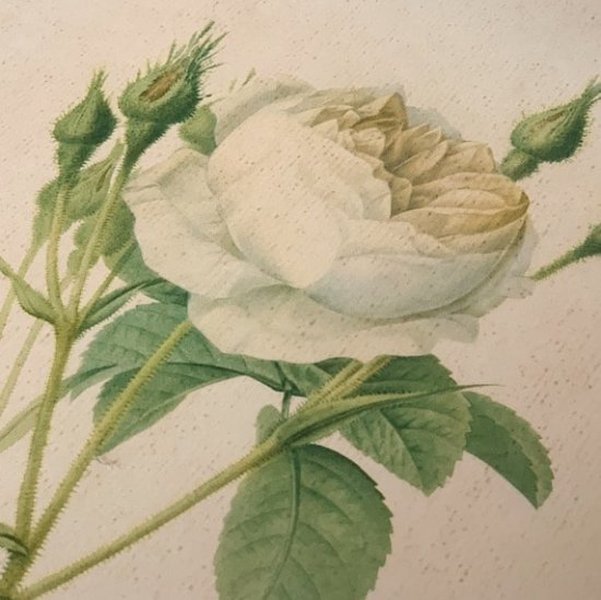 Antique lithographe rose.b<img class='new_mark_img2' src='https://img.shop-pro.jp/img/new/icons47.gif' style='border:none;display:inline;margin:0px;padding:0px;width:auto;' />