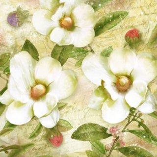 ペーパーナプキン(33)ti-flair:(5枚)Trois Magnolias Blanc-TI100