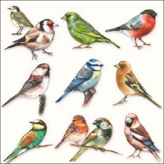 ペーパーナプキン(25)AMB:(5枚)Collection Of Birds-AM46(25)