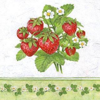 ペーパーナプキン(25)AMB:(5枚)Season Fruit-AM47(25)