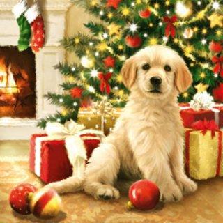 ペーパーナプキン(33)AMB:(5枚)WAITING FOR PRESENTS(犬)-AM228