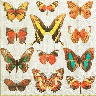ペーパーナプキン(33)caspari:(5枚)Deyrolle Butterflies ivory-CA83