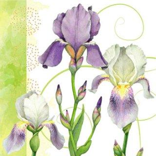 ペーパーナプキン(33)home:(5枚)Iris-HO213