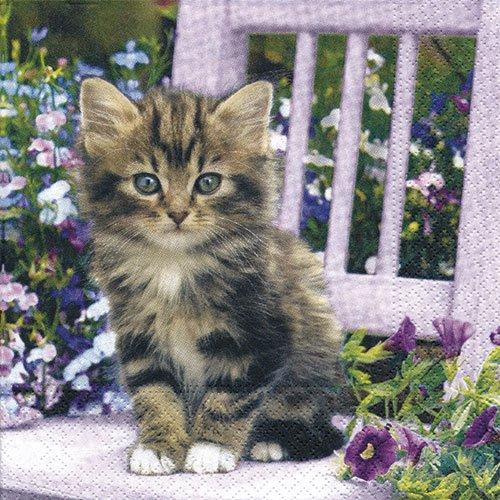 ペーパーナプキン(33)NOUVEAU:(5枚)Kitty-NO85