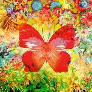 ペーパーナプキン(33)ppd:(5枚)Papillon in love-PP64
