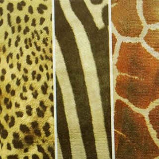 ペーパーナプキン(33)ppd:(5枚)Animal Skins-PP101