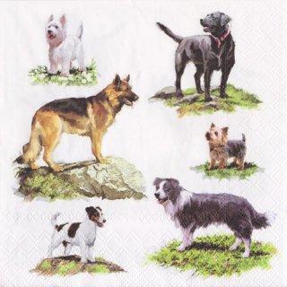 ペーパーナプキン(33)AMB:(5枚)DOGS-AM562