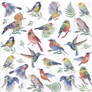ペーパーナプキン(33)AMB:(5枚)BIRDS VOTES-AM564