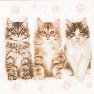 ペーパーナプキン(33)Maki:(5枚)Cats-MA161