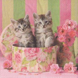 ペーパーナプキン(33)AMB:(5枚)CATS IN BOX-AM581