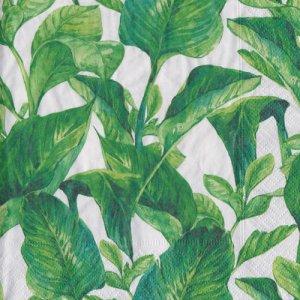 ペーパーナプキン(33)paper:(5枚)エキゾチックリーブズ-PA298