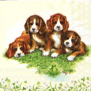 ペーパーナプキン(33)AMB:(5枚)四匹の犬-AM27