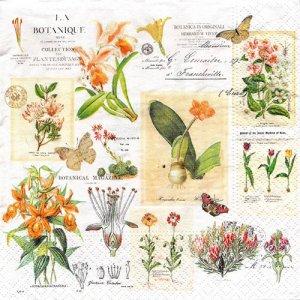 ペーパーナプキン(33)NOUVEAU:(5枚) Botanique-NO110