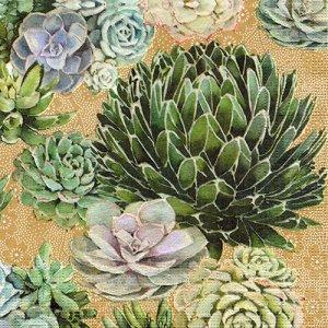 ペーパーナプキン(33)ppd:(5枚)Succulents-PP352