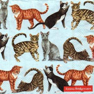 ペーパーナプキン(33)IHR:(5枚)CATS light blue -IH476