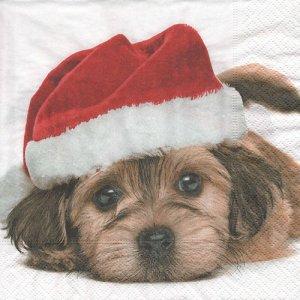 ペーパーナプキン(33)paper duni:(5枚)Santa dog-PA336
